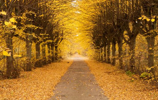 關于秋天的句子及圖片