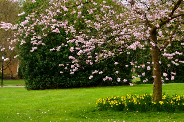 5、春天的雷声像一阵阵清脆的闹铃把小草闹醒了,小草推开土被,懒懒的探出它们的绿色小尖头。树木也被闹醒了,它们忽然发现身上多了许多嫩绿的新芽。树木想:那一定是春姑娘给织上的吧!醒了的花儿争奇斗艳、竞相开放,好像在相互比美一样。 6、春姑娘到来了,树木在不声不响地抽出新的枝条,长出了嫩绿的新芽。柳树的枝条向下垂着,就像一条条丝线挂在树上。那嫩绿色的小叶片里,钻出了毛茸茸的柳絮。杨树、梨树、苹果树、桃树……它们都各显身手,点缀着春天的美景。 7、春天来了,街道两旁的树木吐出了点点嫩