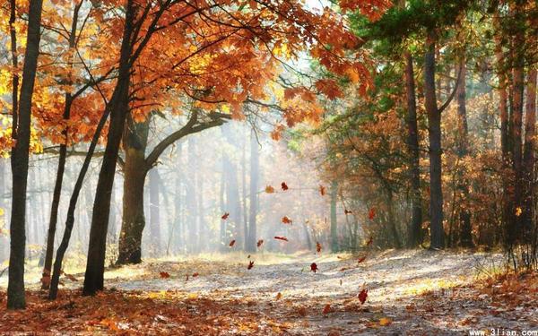 关于秋天美丽的句子