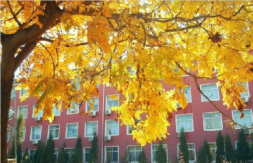 校园的秋天