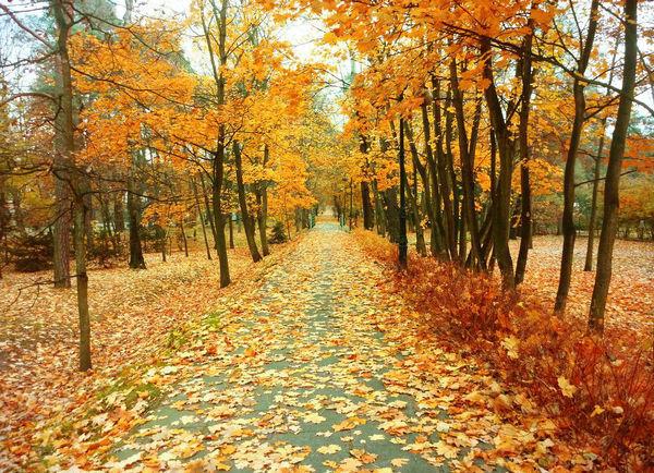 """9、秋天,无论在?#35009;?#22320;方的秋天,总是好的;可是啊,北国的秋,却特别地来?#20204;澹?#26469;得静,来得悲凉。""""西安的秋就这样悄然到来,秋意渐浓,又到了赏秋景的好时节,走在校园中的你有着怎样的心境呢?是否会被这眼前的美景所触动? 10、因为懂得,一切美好;因为存在,温暖相随。"""