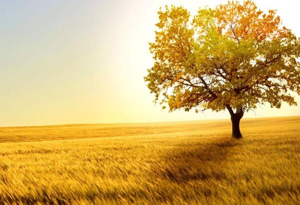 5,又邂逅了一个黎明,嗅着泥土的芳芬,触摸着田埂的孤独。田野被阳光洗的干干净净,它不敢放肆的歌唱,它害怕弄碎天空的宁静。巢中的鸟还未化妆,蹲在枝头,远远附和着它的矜持。一声虫叫,揉碎了禾苗青青。它垂着浅笑的眉毛,把秋天的喜悦藏在胸膺。 6,痛苦如此持久,像蜗牛一样充满耐心的移动。