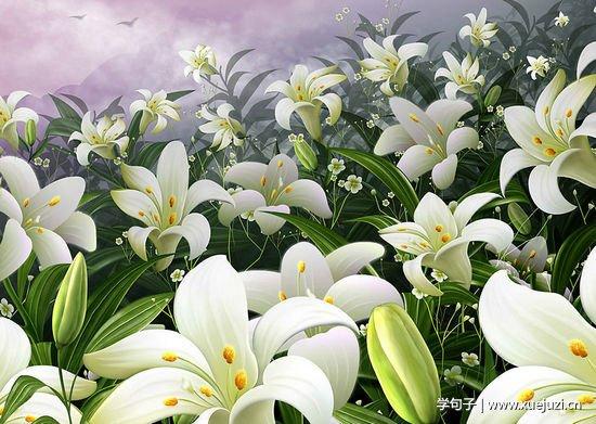 4、学染淡黄萱草色,几枝带露立风斜。自怜入世多难合,未称庭前种此花。 5、百合花沐浴着阳光随风摇曳。那娇柔的花瓣,优美的形态,宛如一个个亭亭玉立的仙女翩翩起舞,高贵典雅,婀娜多姿。香水百合,不愧是百合女王,洁白的花瓣上看不到任何斑点,而那些含苞欲放的花骨朵儿则羞羞答答低着头,仿佛是一位害羞的少女,掩面而笑…… 6、百合花的叶子是深绿色的,就像是一双手,怀里抱着熟睡的花蕾。这个顽皮的小花蕾不知道什么时候才想露出它那可爱的小脸蛋。没过几天,一朵朵美丽的百合花开了,绽放的百合花像喇