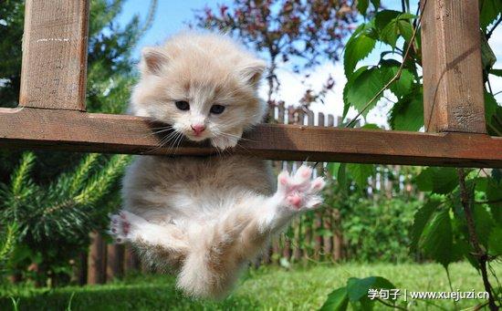 真可爱动物图片