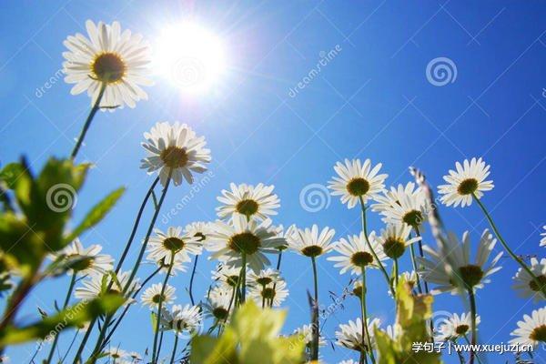 描写夏天景色的诗句