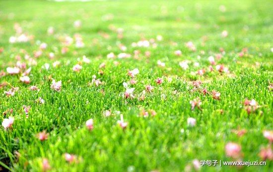 描写草地的句子及图片