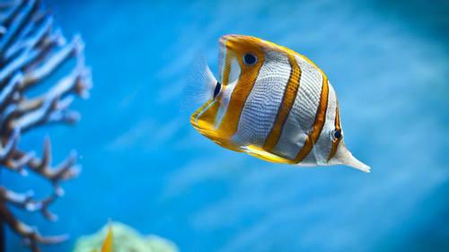 鱼的句子图片