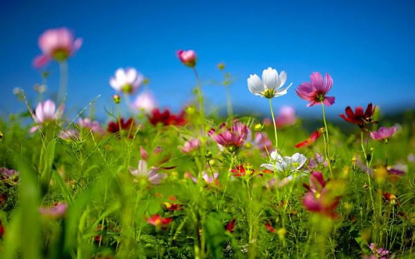 赞美春天的诗句(共180句)
