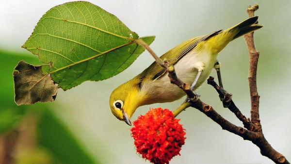 小鸟的图片