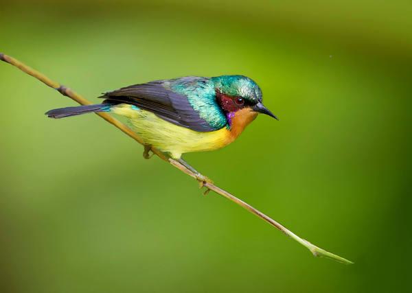 小鸟的句子带图片