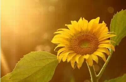 关于花的句子及图片