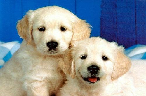 关于狗狗的句子及图片