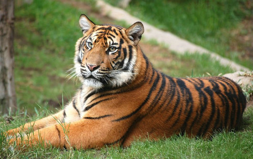 关于描写老虎的句子及图片