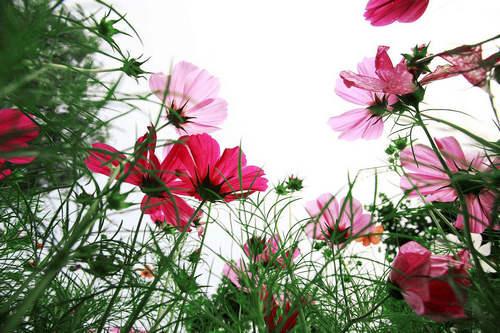 鲜花图片及唯美文字