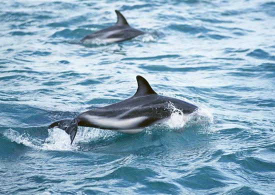 海豚之心简笔画可爱