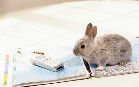 描写小兔子的句子及图片,形容小兔子的句子摘抄带图片