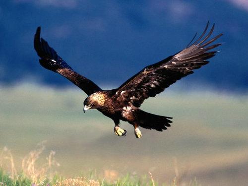 描写鹰的句子及图片,关于形容老