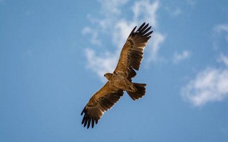 雄鹰展翅图片大全大图高清图及句