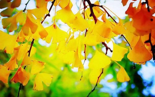 描写树叶的句子及图片