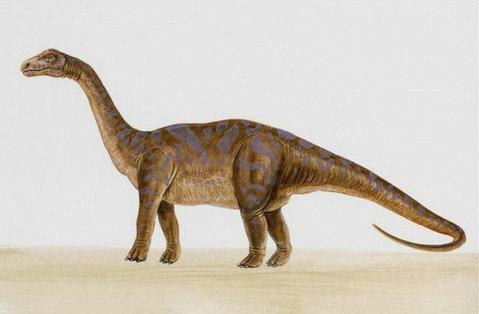 描写恐龙的句子及图片