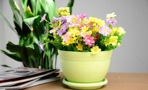 描写花盆的句子及图片