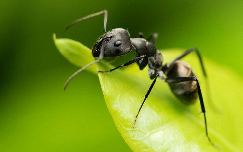 描写蚂蚁的句子好段及图片49 / 作者:天天部落 / 帖子ID:21659,21687