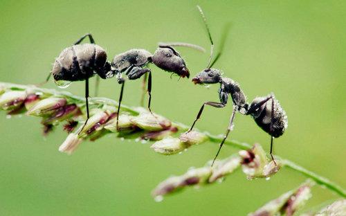 描写蚂蚁的句子好段及图片34 / 作者:天天部落 / 帖子ID:21659,21687
