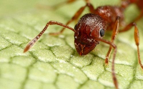 描写蚂蚁的句子好段及图片24 / 作者:天天部落 / 帖子ID:21659,21687
