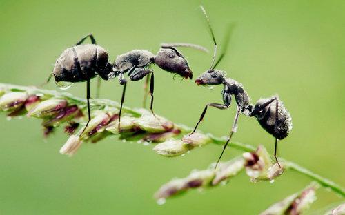 描写蚂蚁的句子好段及图片4 / 作者:天天部落 / 帖子ID:21659,21687
