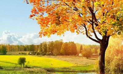 描写秋天景色的优美句子:秋的天