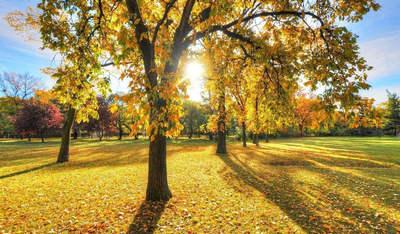 关于秋天的句子带图片