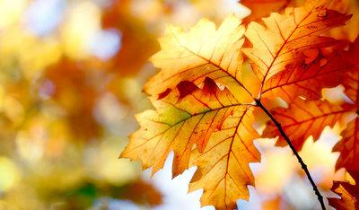关于形容秋天的句子带图片