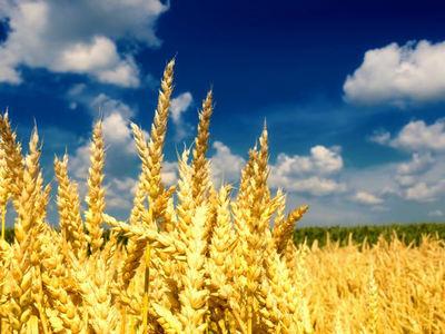 描写秋天丰收的句子及图片:秋天是丰收的季节,也是使