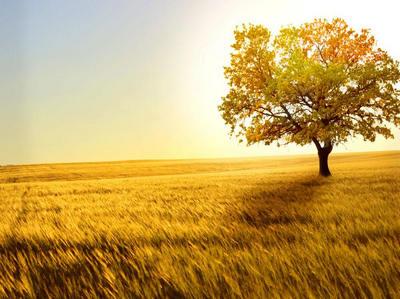 表示秋天的唯美句子带图片,描写
