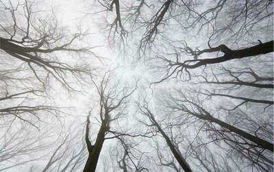 描写冬天的悲伤句子及图片:初冬