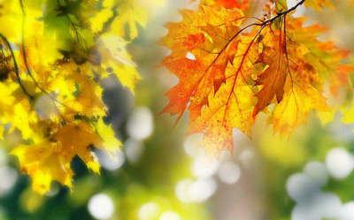 秋天唯美句子及图片