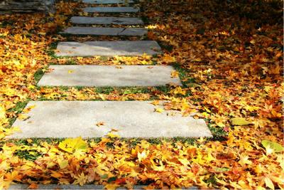 关于秋天的好句子带图片:碧云天