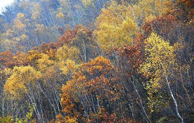 秋天景色的句子