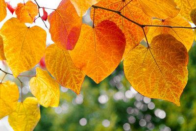 2,秋天再来时,伴我的是一份孤独和寂寞,秋天再来时,多少分离聚合.