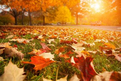 秋天的句子短句唯美:秋天是美丽