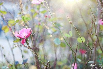有关爱情表白的句子,最含蓄隐藏的表白的句子