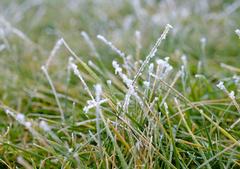 形容描写冬天小草的句子图片,冬