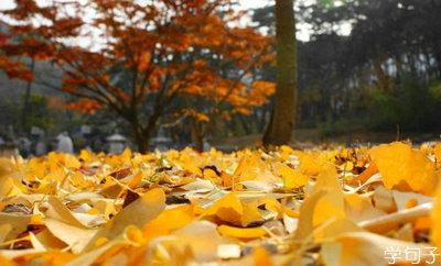 秋天的银杏句子及图片,描写秋天的银杏句子带图片