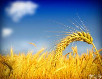 学句子 描写秋天的句子 > 正文  秋天的句子大全 1,秋天在田野里.