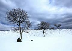 冬天的寒冷句子短一些:冬天整个