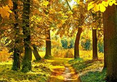 秋天美景的句子:金黄与葱绿,红