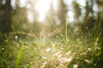 阳光雨露的句子及图片