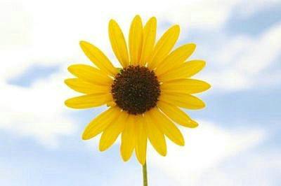 关于阳光向上的句子,阳光向上的句子简短