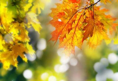 秋天的句子段落