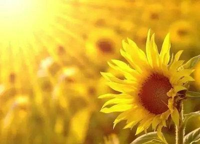 心有阳光唯美句子说说心情及图片